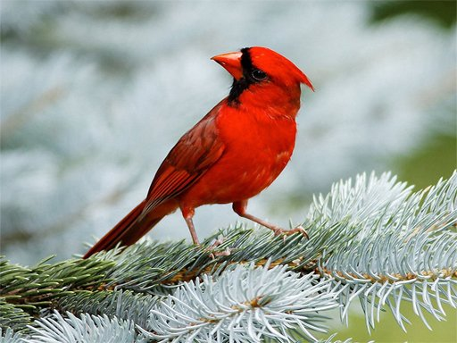 Play Birds Puzzle Now!