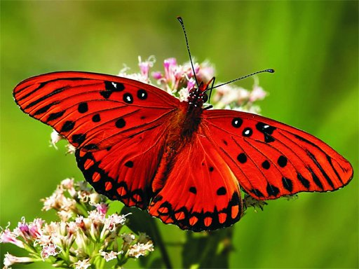 Play Nature Jigsaw Puzzle - Butterfly Now!