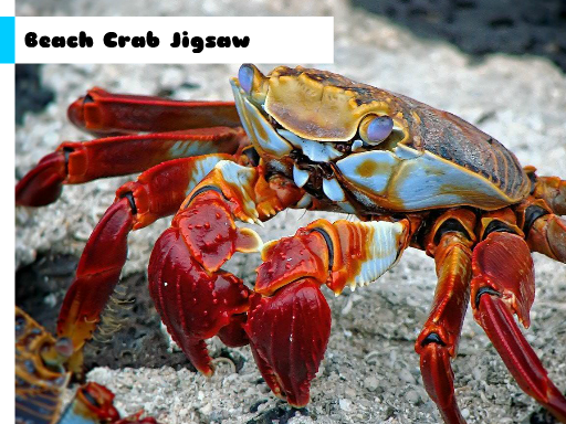 Play Beach Crab Jigsaw Now!