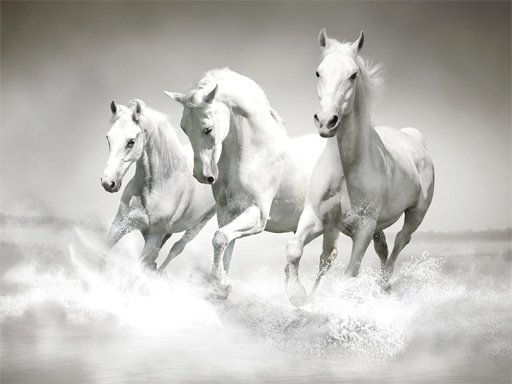 Play Horses Puzzle Now!