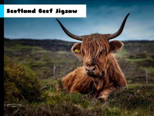 Play Scotland Beef Jigsaw Now!