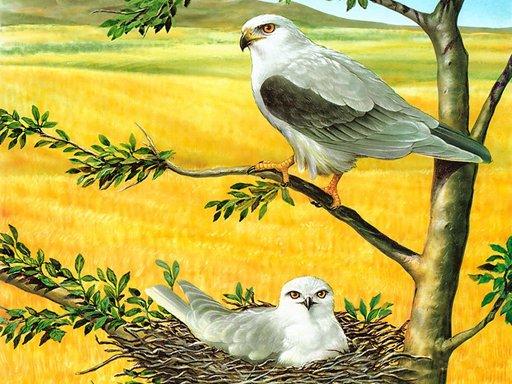 Play Birds of Prey Puzzle Now!