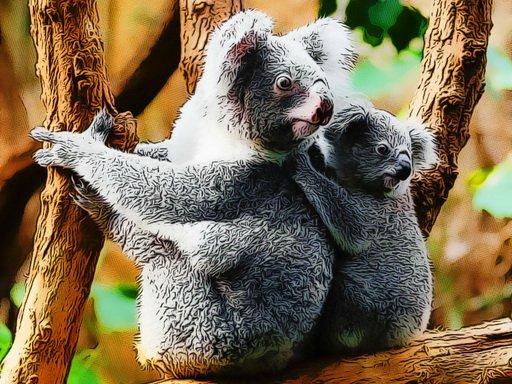 Play Cute Baby Koala Bear Now!
