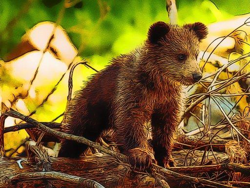 Play Cute Baby Bears Now!