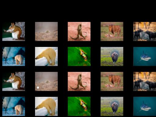 Play Animal Memory Now!